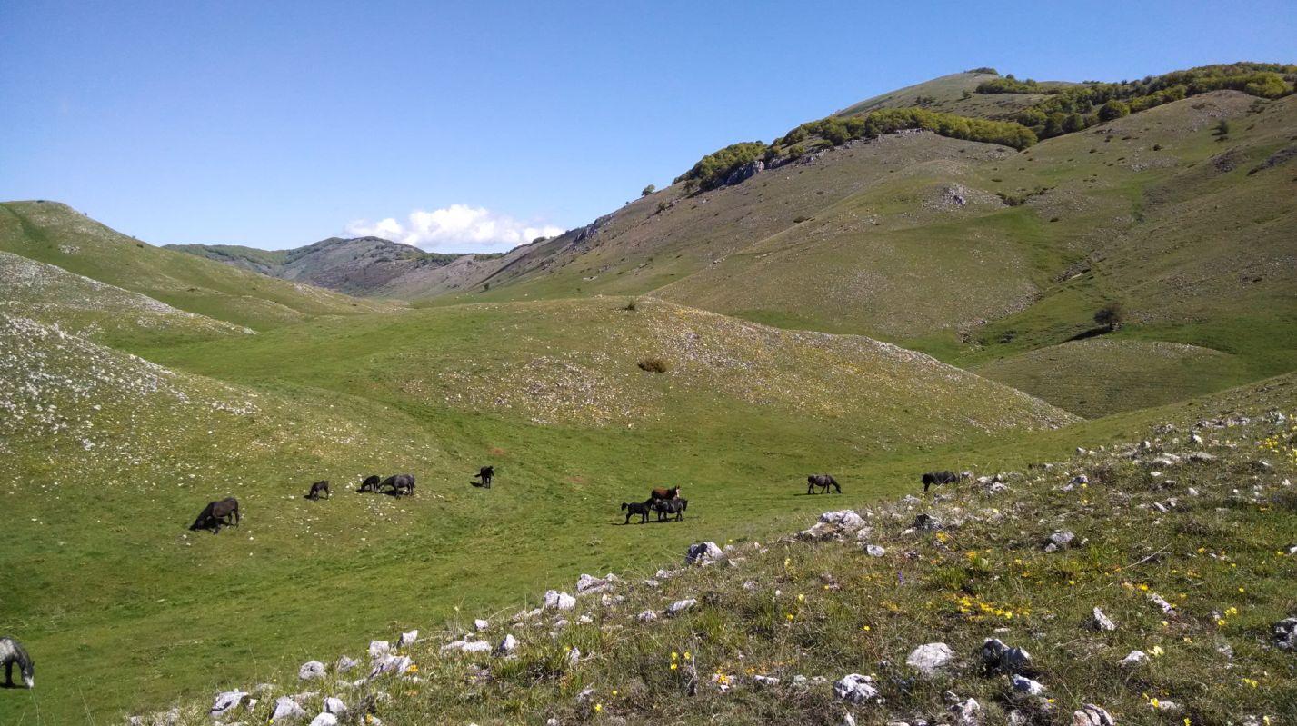 La Valle della Dogana