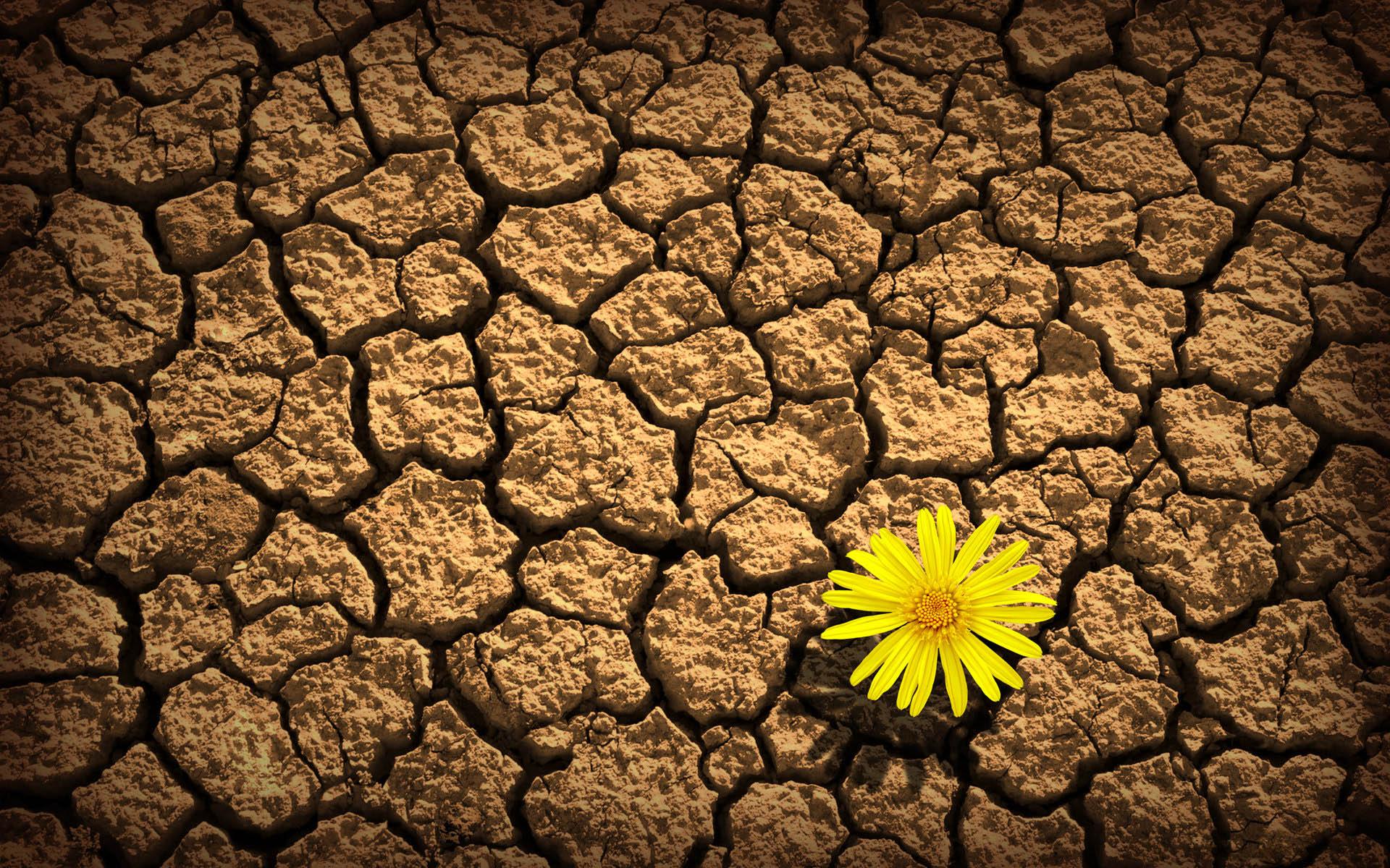 flower-dry-land
